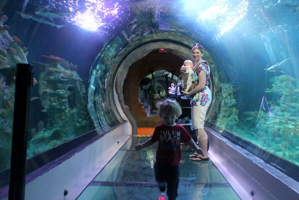 Family fun in tempe and chandler arizona tips for baby Arizona mills mall aquarium